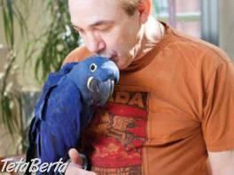 Prodám Hyacint papoušek papoušci , Zvieratá, Ostatné    Tetaberta.sk - bazár, inzercia zadarmo