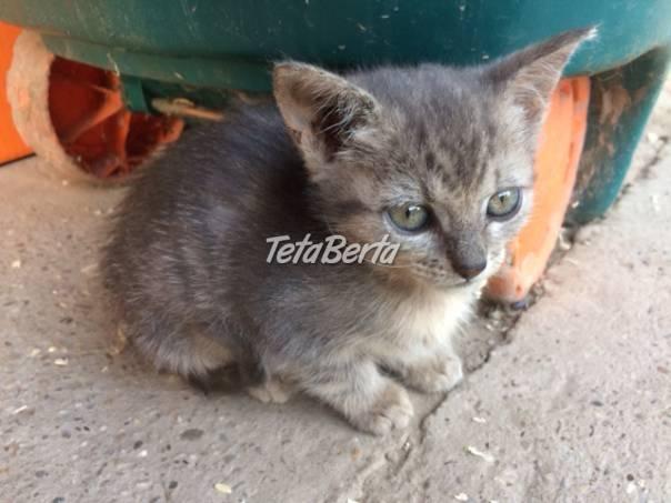 Darujem macicky, foto 1 Zvieratá, Mačky | Tetaberta.sk - bazár, inzercia zadarmo