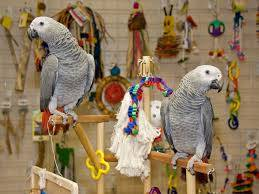 Africké sivé papagáje Zako, foto 1 Zvieratá, Ostatné   Tetaberta.sk - bazár, inzercia zadarmo