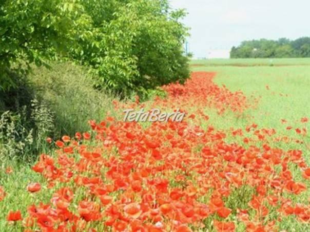 RK0602157 Pozemok / Orná pôda (Predaj), foto 1 Reality, Pozemky   Tetaberta.sk - bazár, inzercia zadarmo