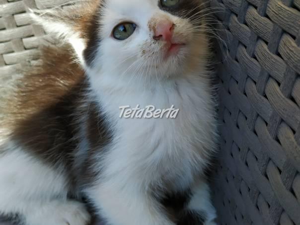 Darujem mačičku, foto 1 Zvieratá, Mačky   Tetaberta.sk - bazár, inzercia zadarmo