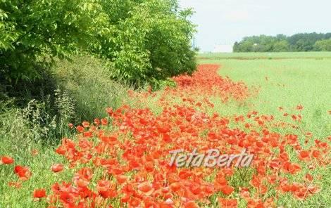 RK0602138 Pozemok / Orná pôda REZERVOVANÉ, foto 1 Reality, Pozemky | Tetaberta.sk - bazár, inzercia zadarmo